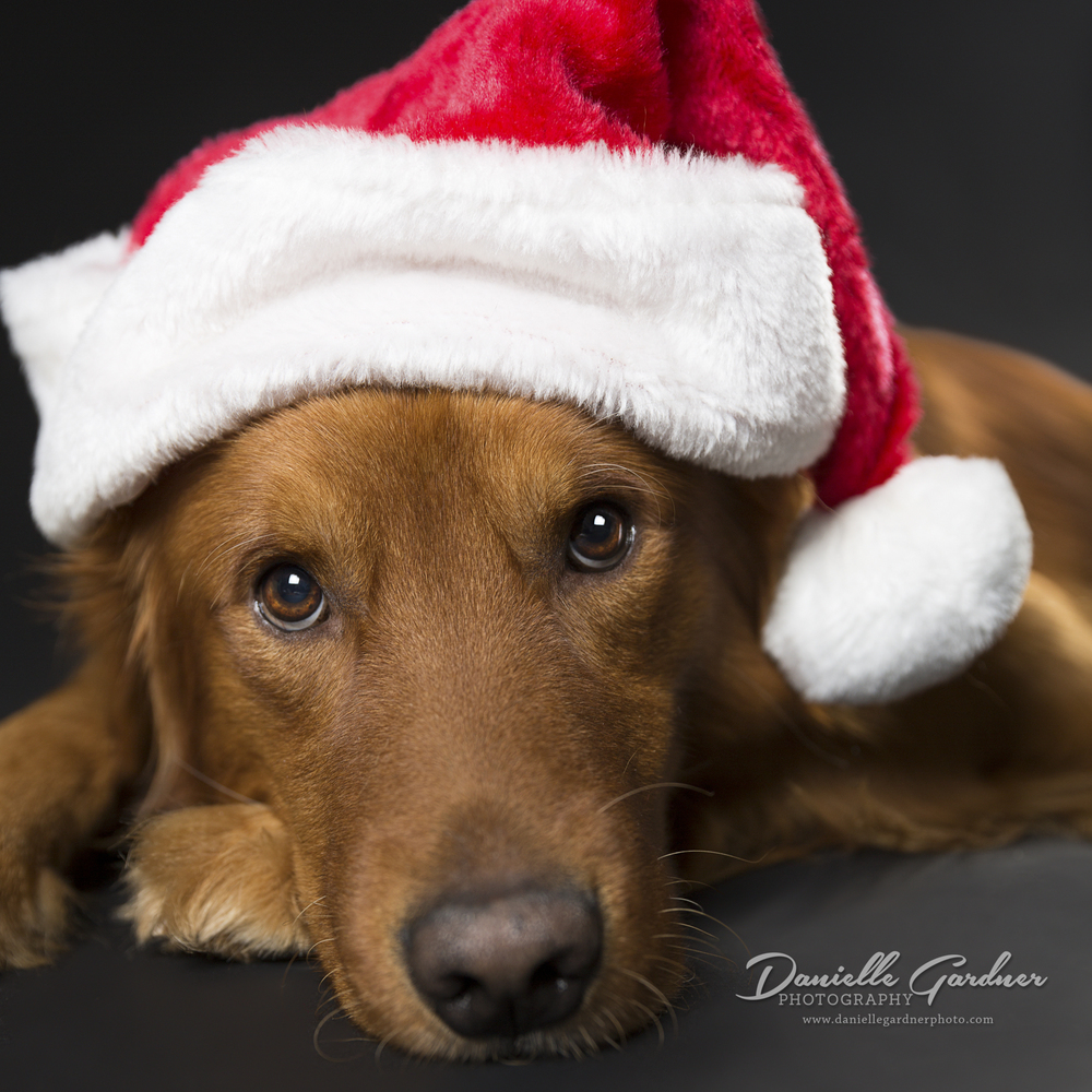 Atlanta_Pet Photography_Holiday_Danielle Gardner-2.jpg