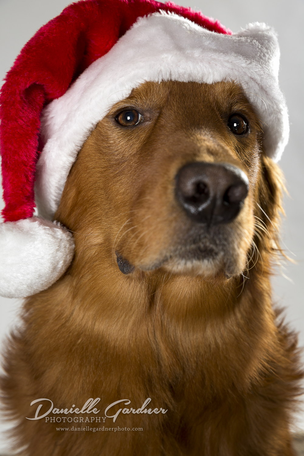 Atlanta_Pet Photography_Holiday_Danielle Gardner.jpg
