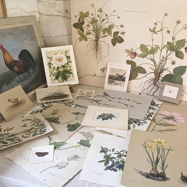 As plants and critters are waking up outside, I'm pulling art out of the portfolio to welcome the season with @starbrightfarm at their Spring Barn Market on April 29th, from 10am-4pm!  #megpagestudio #starbrightfarm #spring #welcomespring #barnsale #portfolio #naturalistart #botanicalart #art #artsale #art