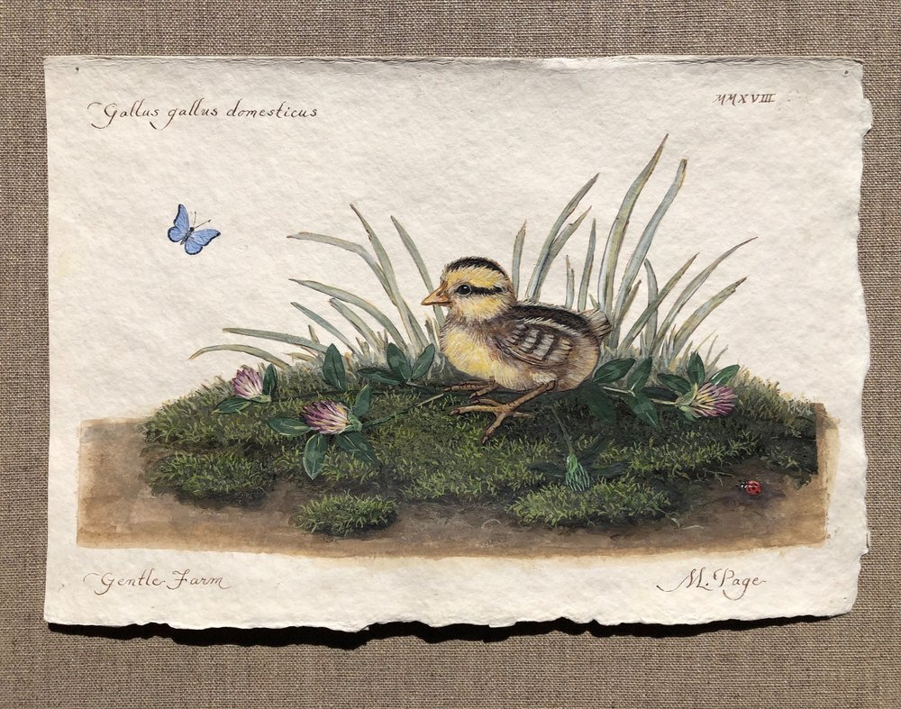 """Jungle Fowl Chick on Moss  With Clover and Little Blue Flutterby and Ladybug   8""""x10"""" sheet – $120"""