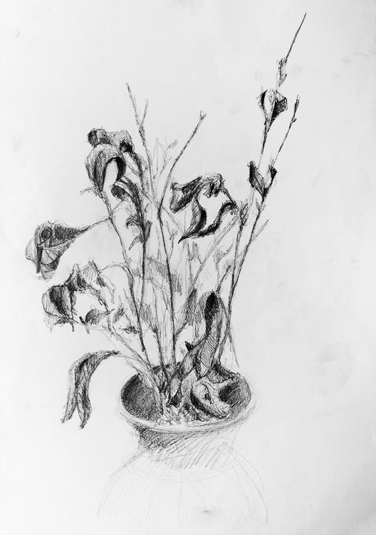 Plant Study - Mark Cela