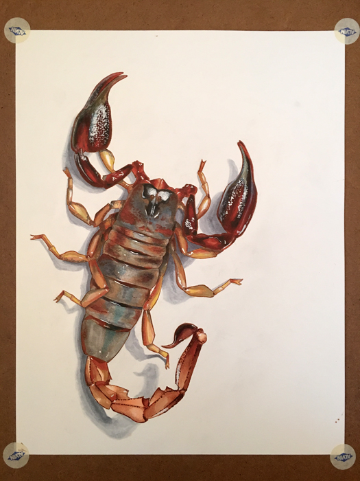 Scorpion Study - COPIC Marker & Multiliner