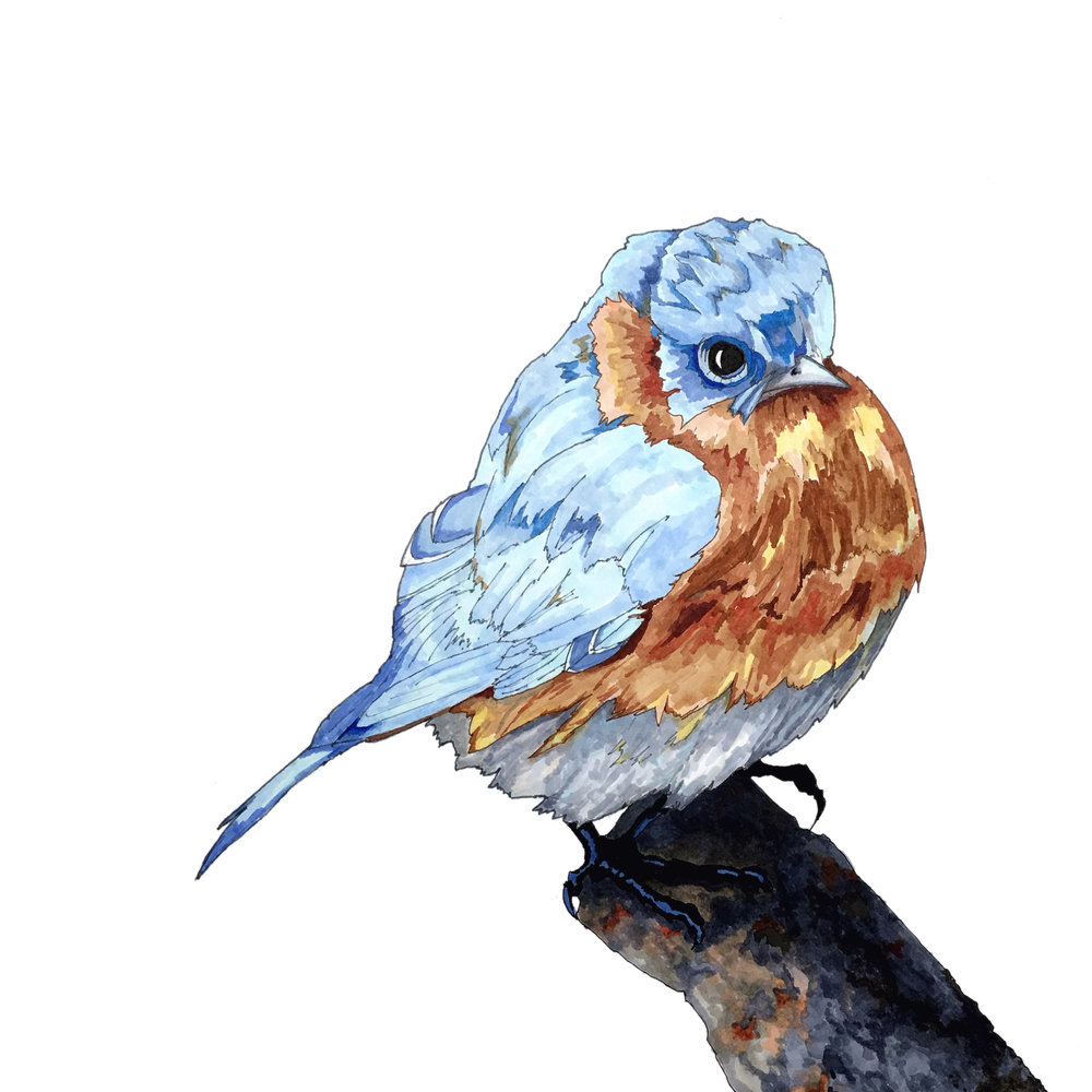 Bluebird - COPIC Sketch Markers