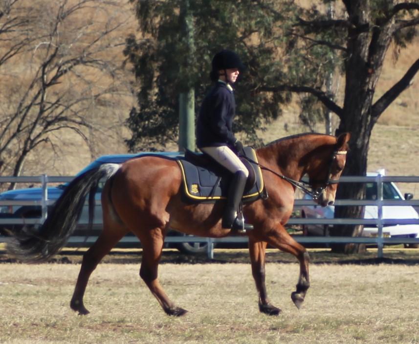 horse sports2.jpg
