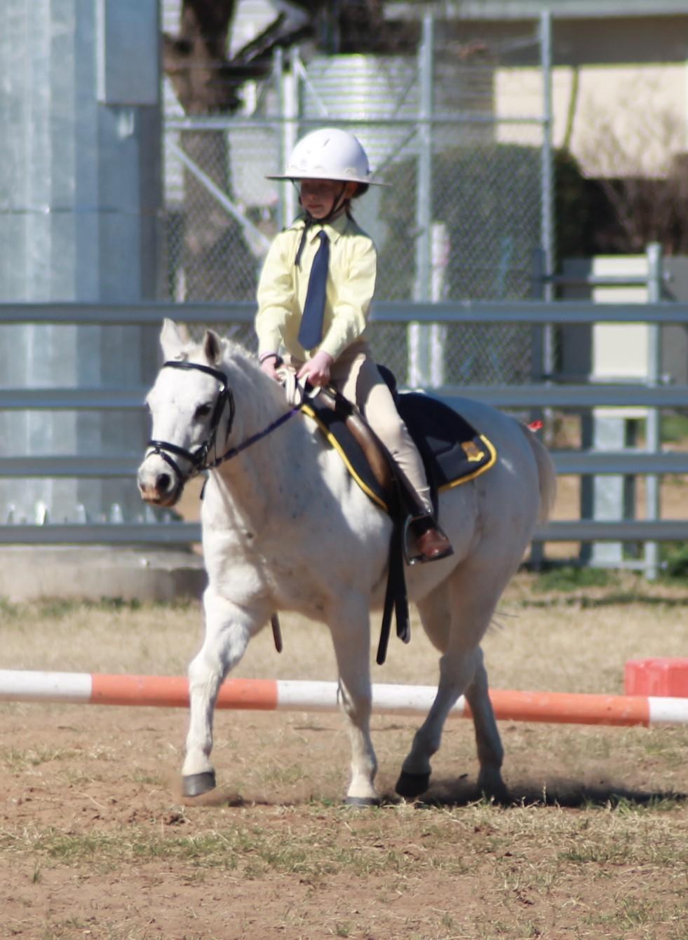 horse sports3.jpg