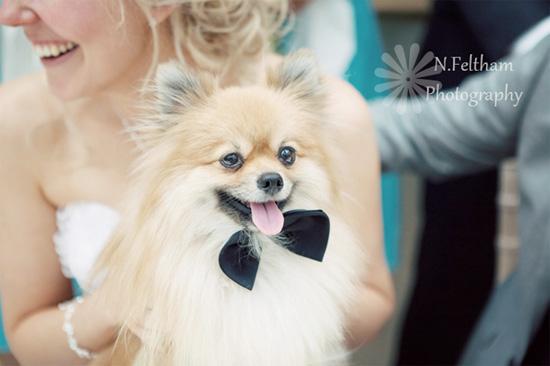 dogs-in-weddings-022212-2.jpg