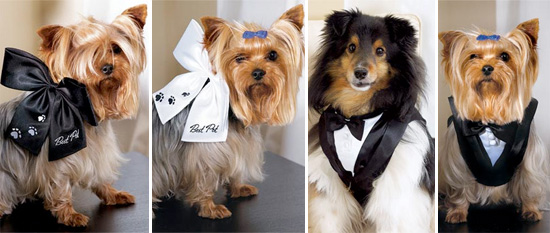Incorporate Your Pet In Your Wedding Day