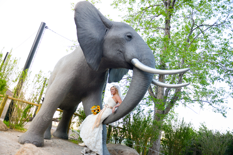such a fun photo of a bride sitting on an elephant | Cheyenne Mountain Zoo wedding | photo by Trystan Photography