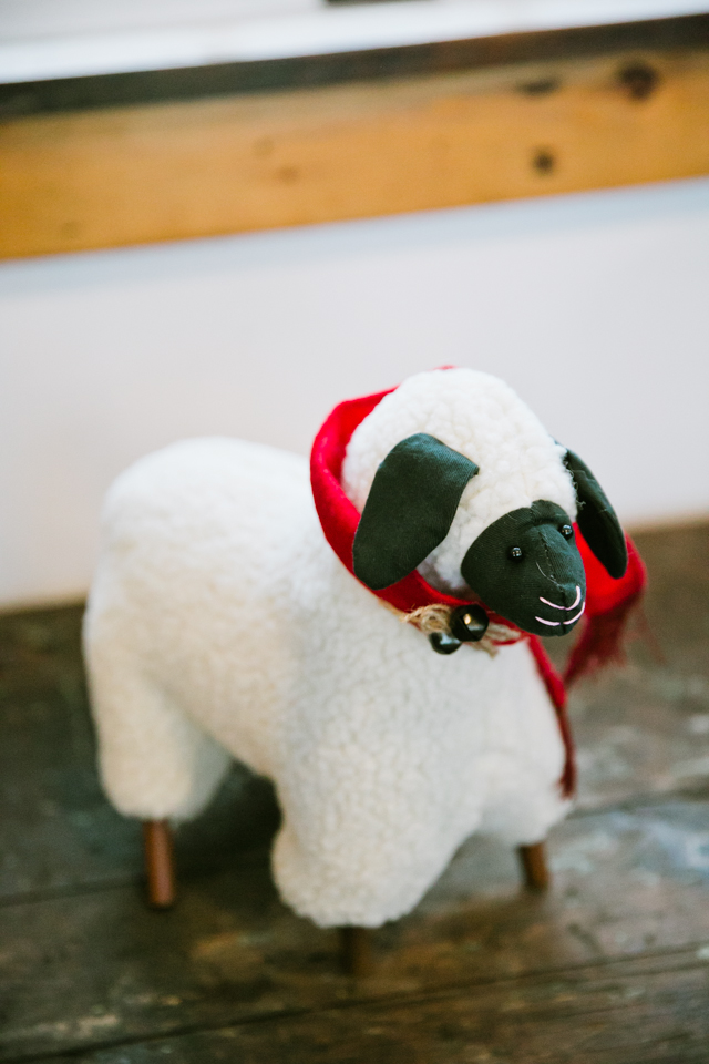 cute sheep at Riverside Farm in Vermont for weddings - photo by Jasmine Lee Photography
