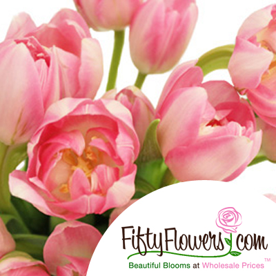 Fifty Flowers : wholesale flowers delivered fresh and direct from the farm to your doorstep