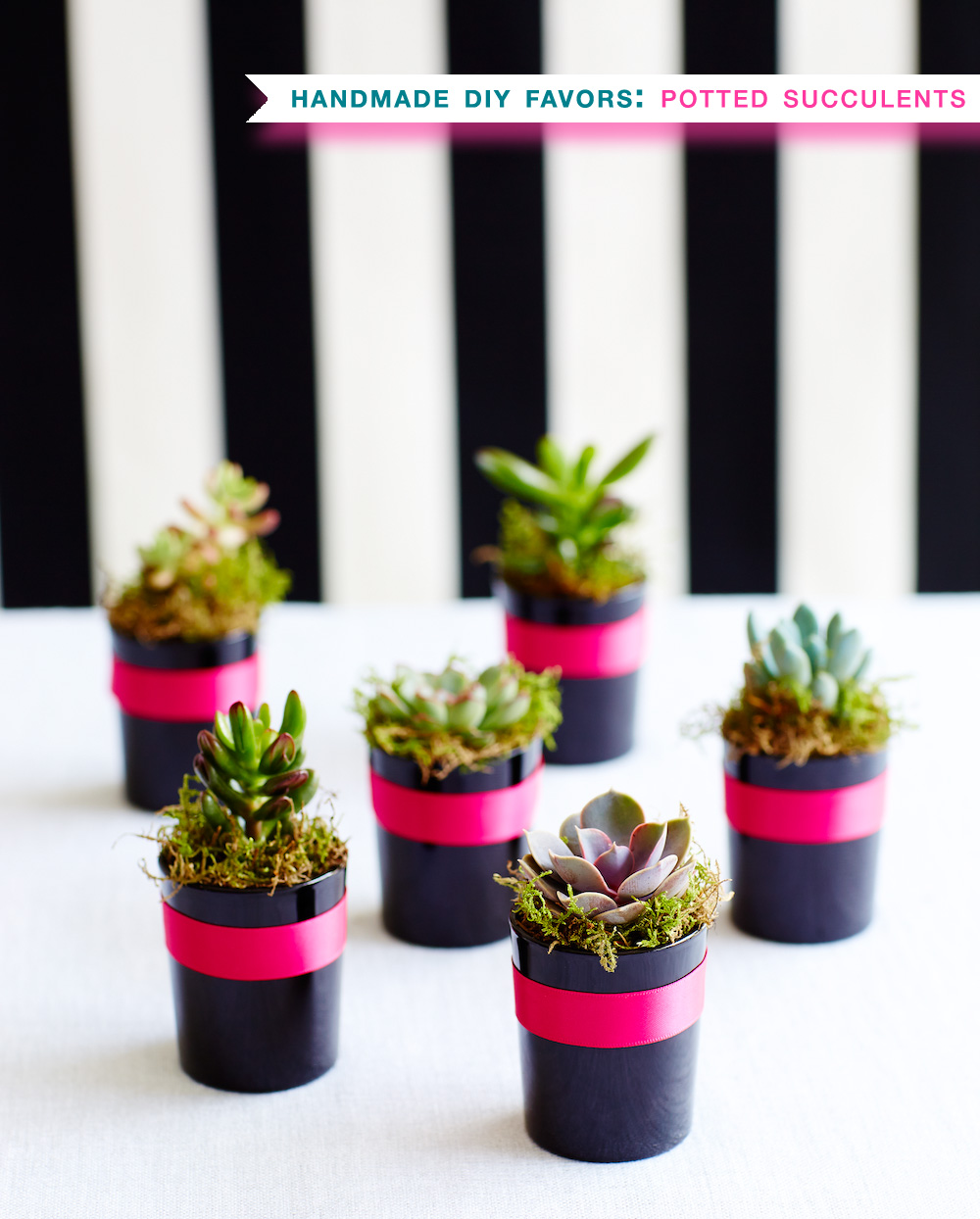 Potted Succulents : DIY Handmade Party Favors / find the how to at www.BrendasWeddingBlog.com
