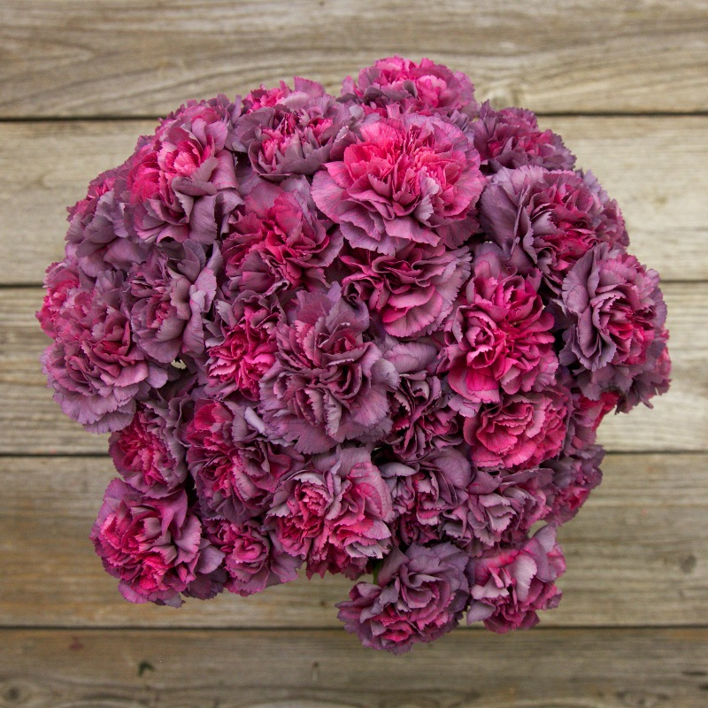 XOXO Bouquet : features Gillyflowers with amazing antique purple blooms