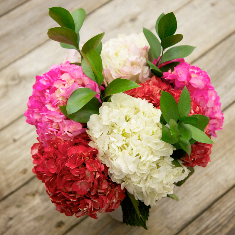 Pucker Up Bouquet : a lovely bouquet of mixed color hydrangeas