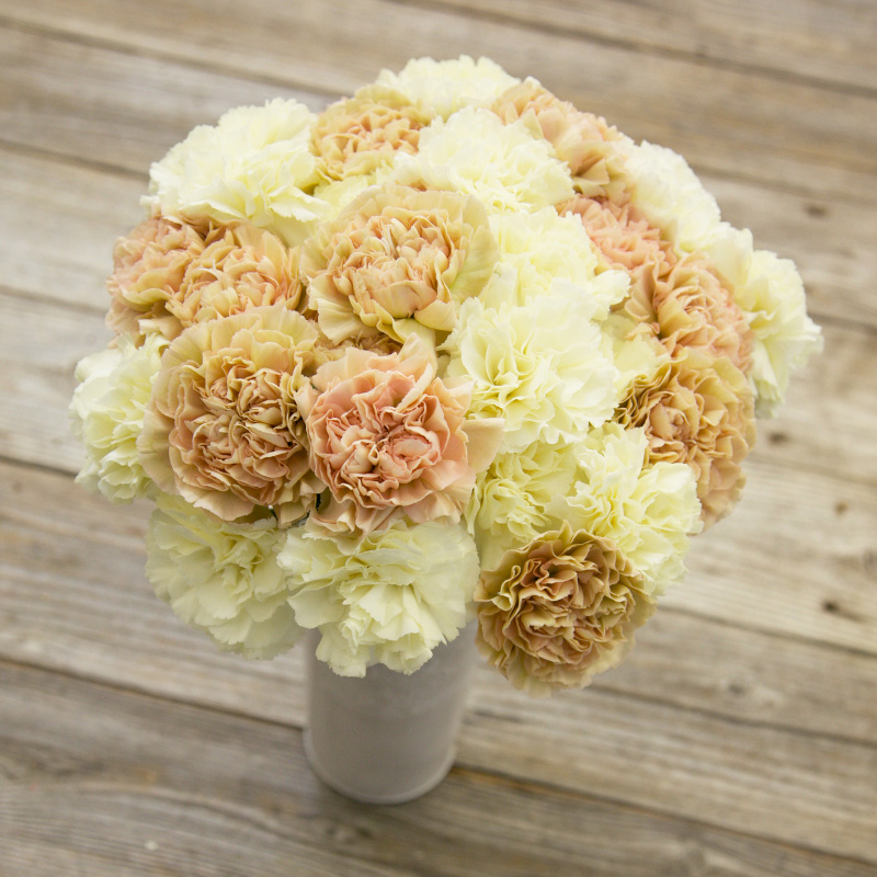 Bubbly Bouquet : untraditional with the lovely Gillyflowers in an antique color