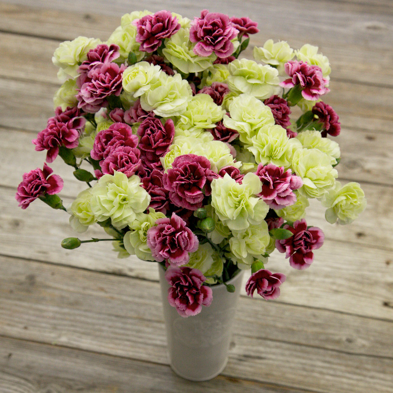 Happy Together Bouquet : a pretty bouquet of Gillyflowers in purple and green blooms