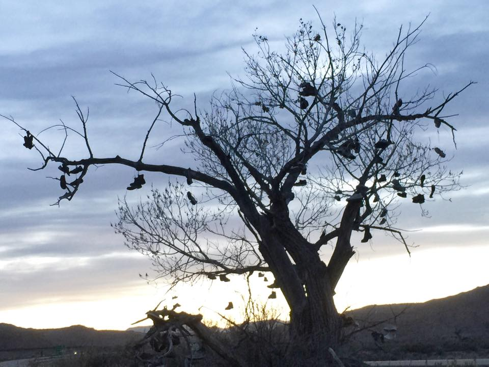 Shoe Tree, Utah I-70, near exit 99