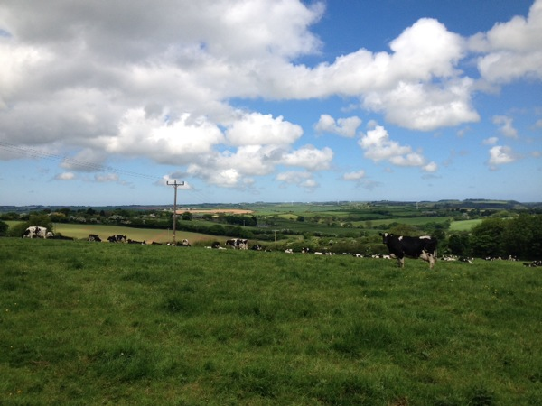 Cornwall country side - my first photo of green pastures. The locals told me that this corner of the UK was the sunniest and warmest spot in the country on this day.