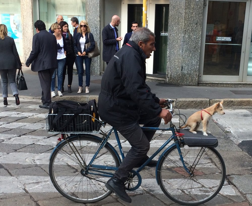 Even the dogs have style in Milano