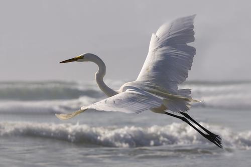 flying crane.jpg