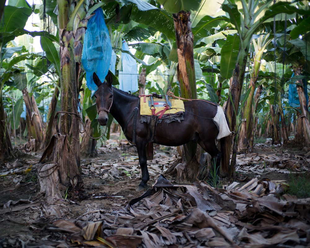 costa-rica-banana-trade-9314.jpg