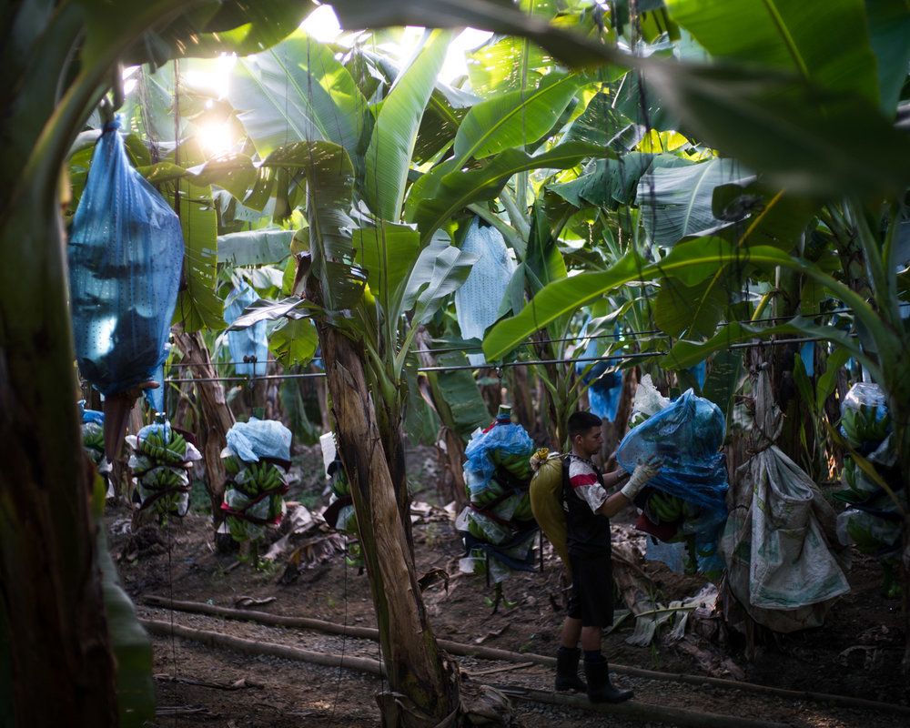 costa-rica-banana-trade-9448.jpg