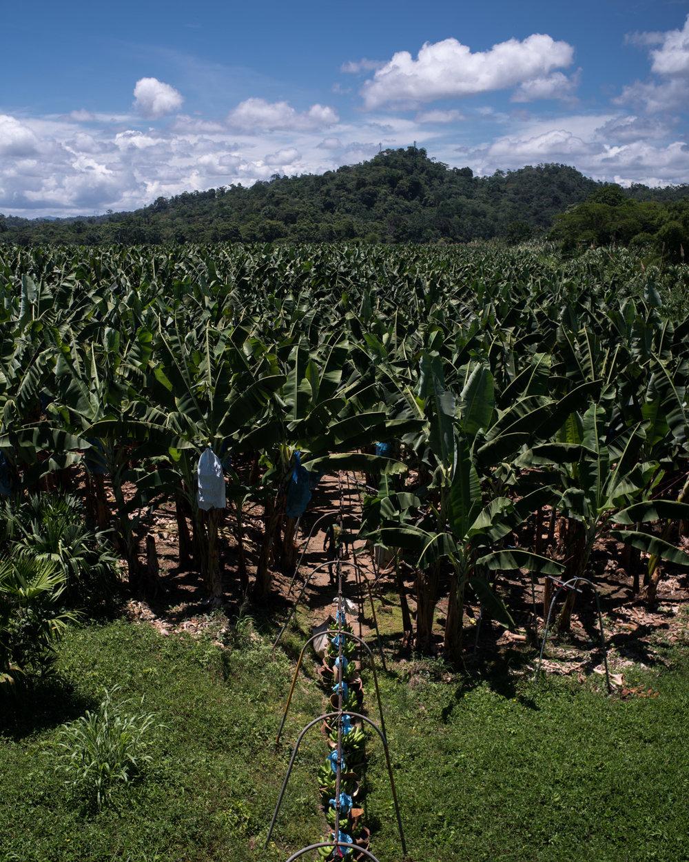 costa-rica-banana-trade-9563.jpg