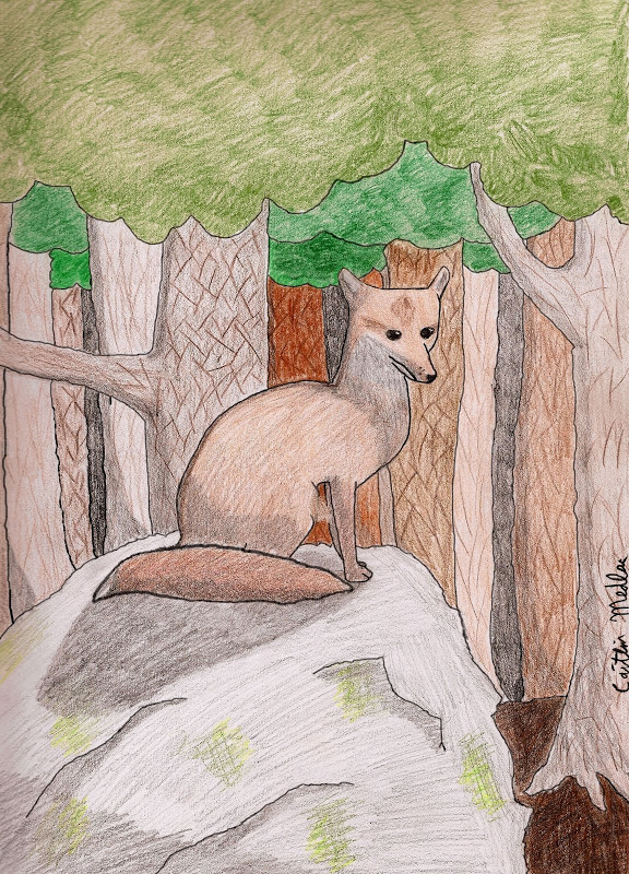 Fox in Forest