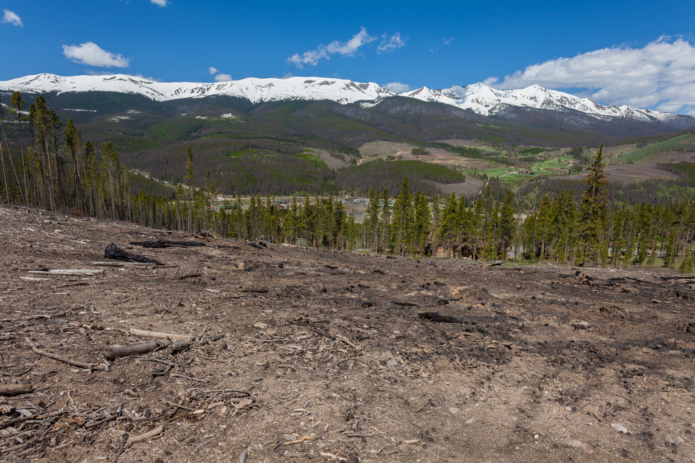 View over Breckenridge Lodgepole Beetle clear-cut, toward the Ten Mile Range, Peaks One through Six