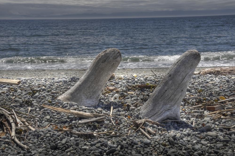 """Orcas"" out of Driftwood, South beach, San Juan Island, Washington"