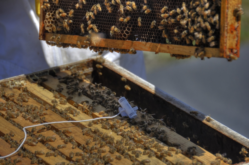 Bees A-go- go