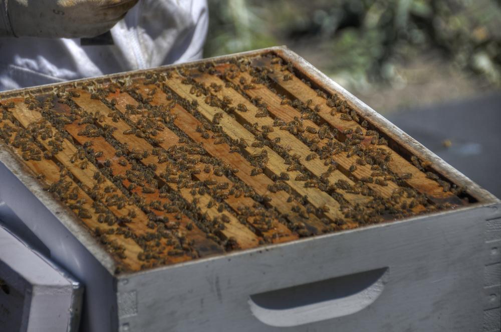 _DSC8776_bees_tonemapped.jpg