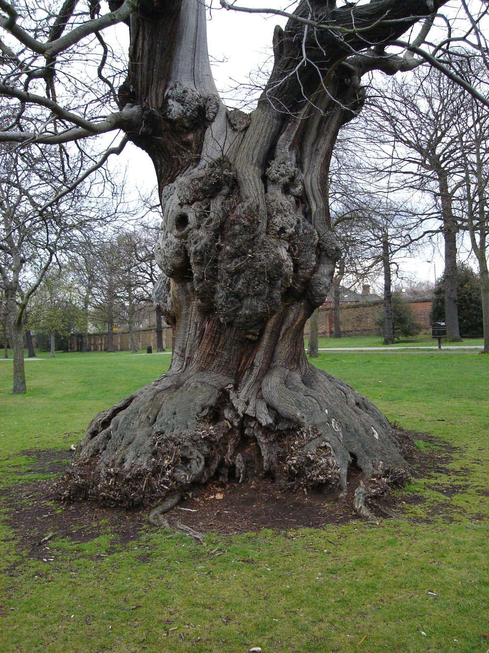 These were the trees we knew back in the U.K