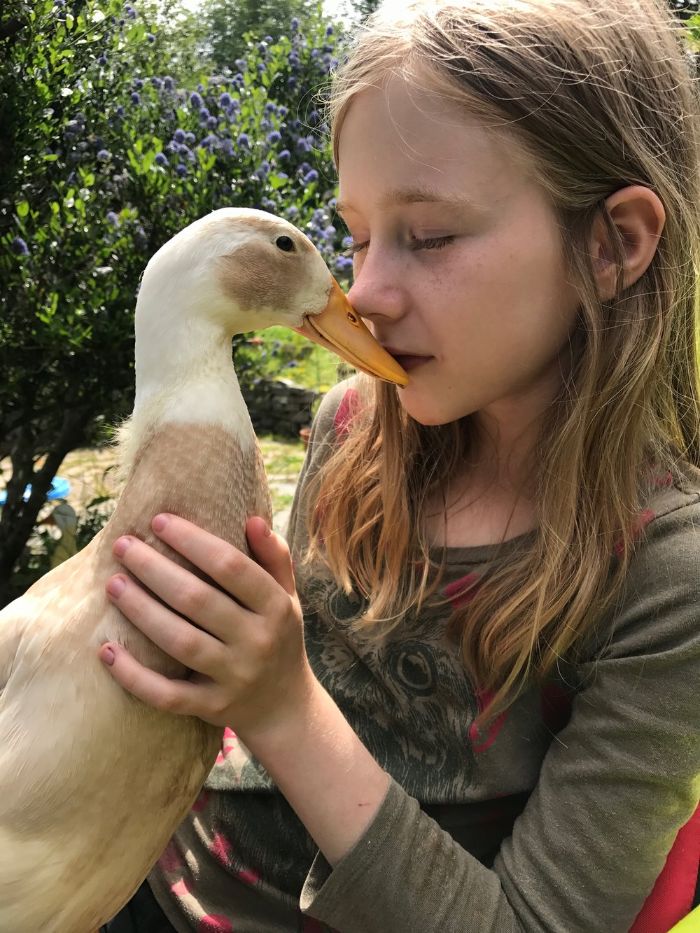 Talula and our duck Jemima. named after Jemima Puddle duck by Beatrix Potter