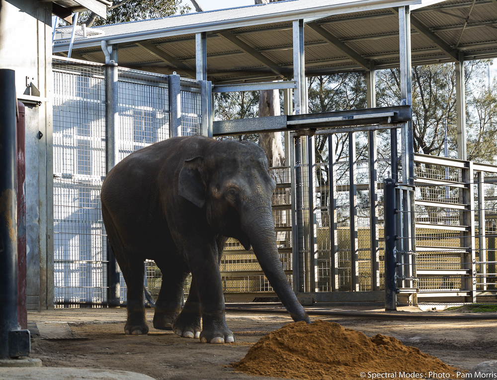 Melbourne Zoo Elephant Enclosure Client:  Zoos Victoria  Est. Project Budget: $10,000,000  Elephant enclosure and associated structures and civil works