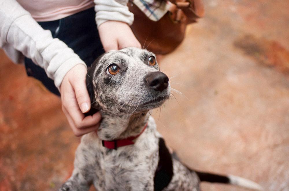 petting street dogs