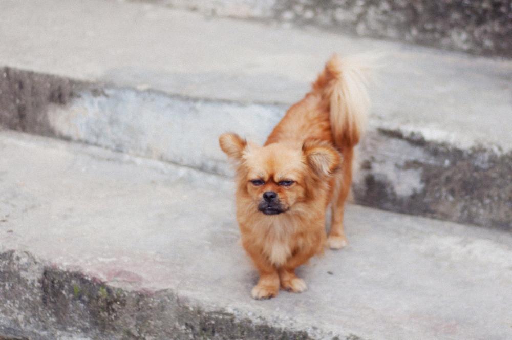 grumpy street dog