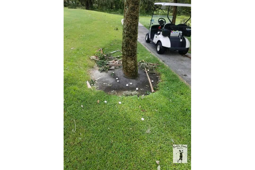 The Sixth Hole at the Bobby Jones Golf Course in Sarasota gave up about a dozen balls in Hurricane Irma's winds. Photograph courtesy of Bobby Jones Golf Club and the Sarasota Observer.