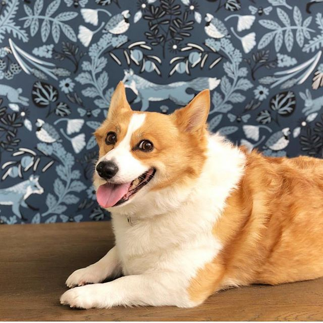 Okie showing off that @hyggeandwest + @helmsiebaby  Piedmont wallpaper. Working it  guuurl ⚡️