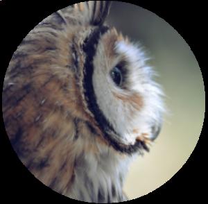 owl circle 300.png