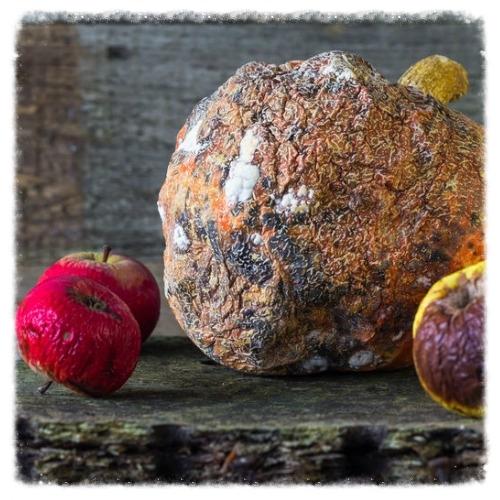 rotten fruit.jpg
