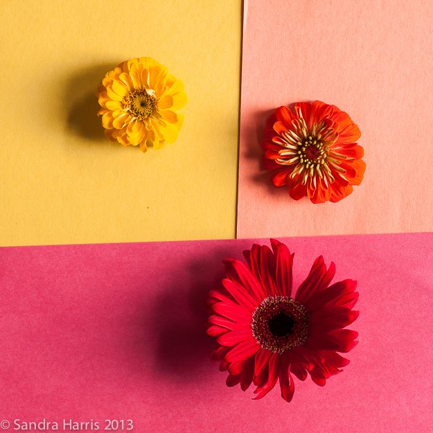 Graphic flowers photography styling - Sandra Harris