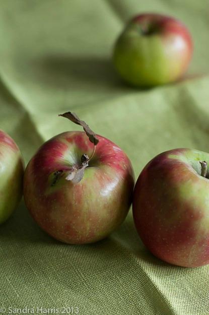apples still life food photography - Sandra Harris