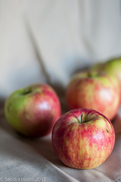apples graphic food photography - Sandra Harris
