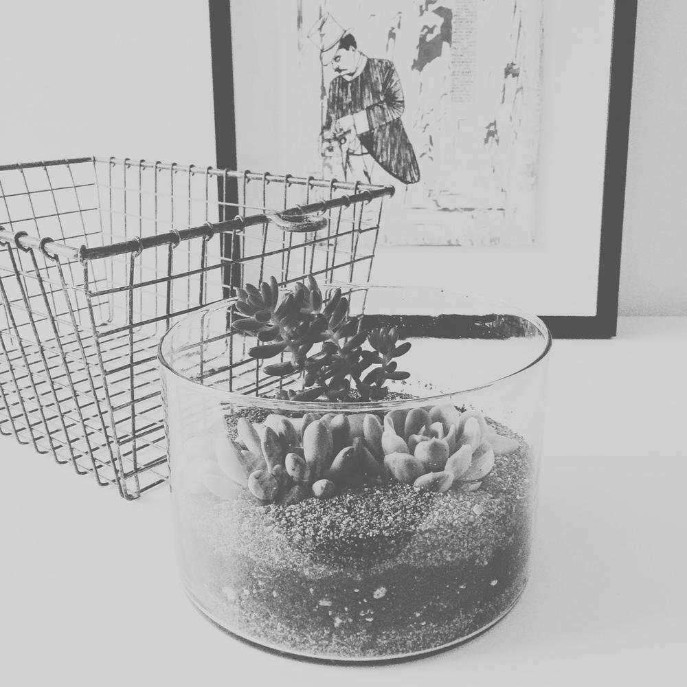 succulent terrarium - Sandra Harris