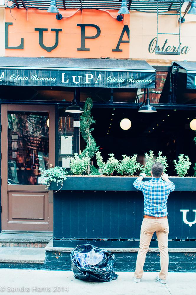 Lupa, Sullivan Street, NYC - Sandra Harris