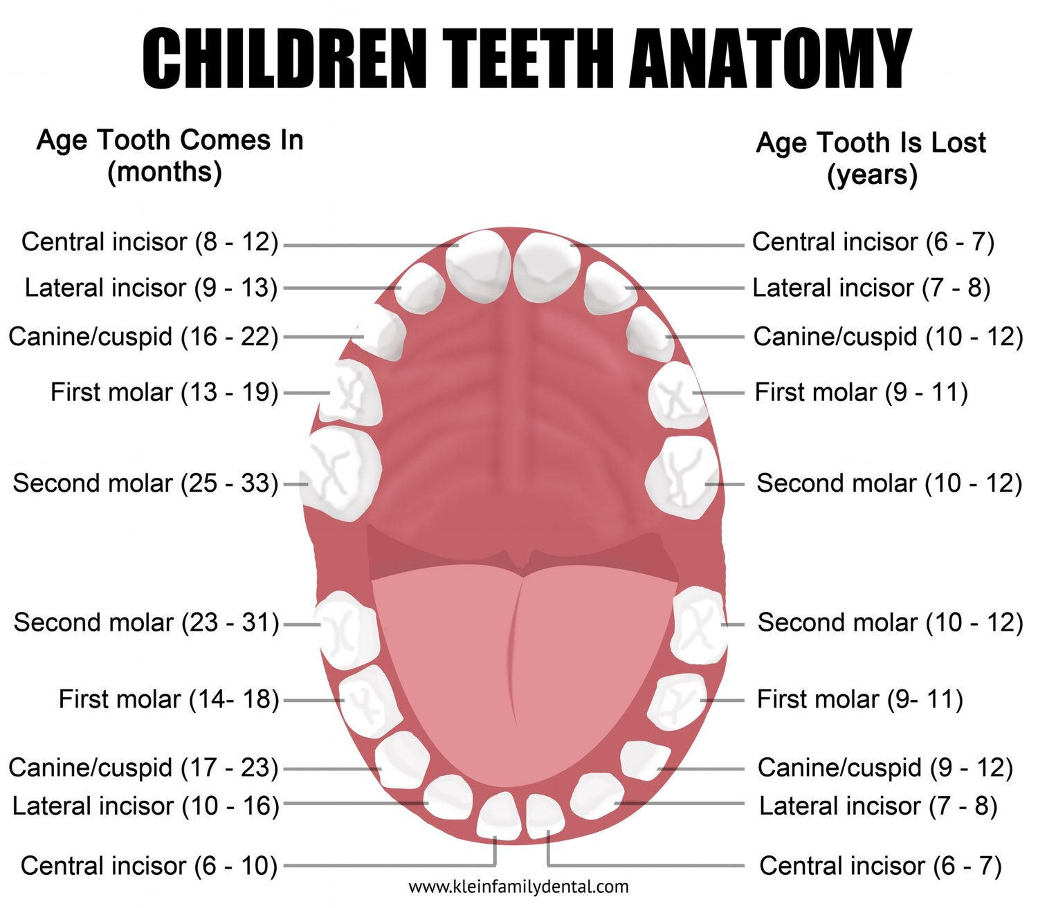 Pediatric tooth chart klein family dental