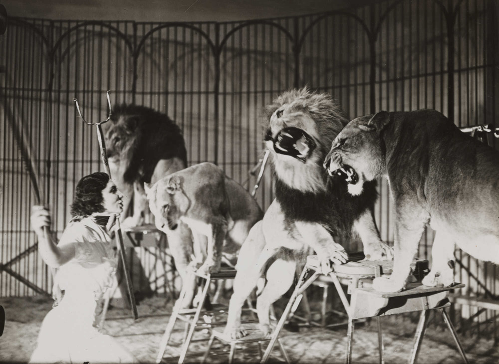 Line Producer as Lion Tamer. Survive the show each night, you're a hero. Or don't, and get eaten alive.