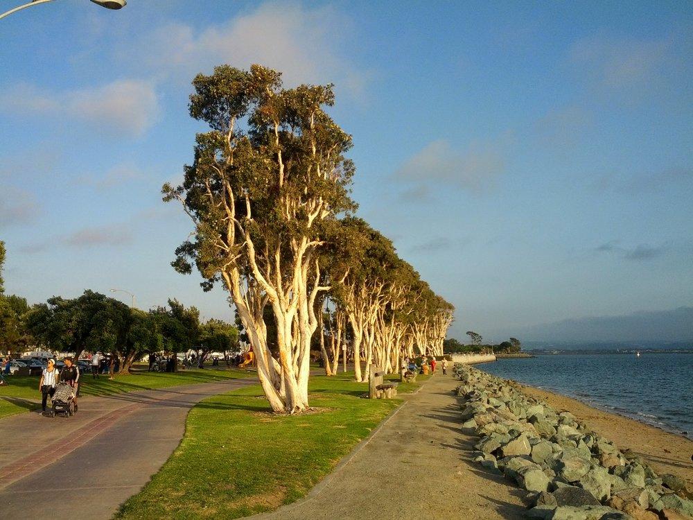 Trees_in_Chula_Vista_Bayfront_Park.jpg