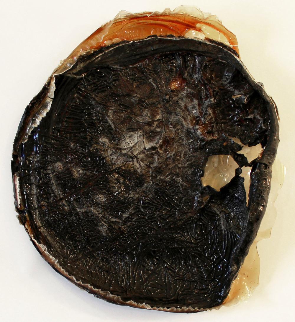 thick2 2014 gelatin, paprika, hibiscus 13 inches diameter