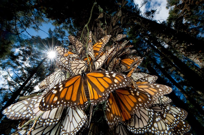 MONARCHS-BY-NATIONAL-GEOGRAPHIC-copia.jpg